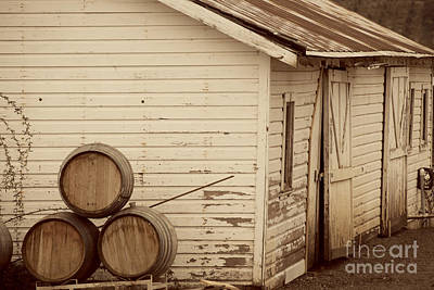 Wine Barrels And Rustic White Barn Poster