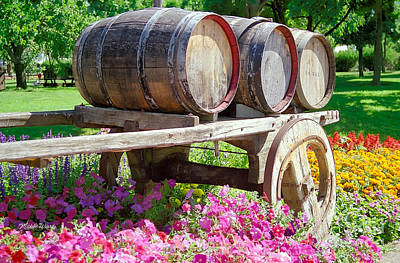 Wine Barrels In Spring At V Sattui Winery Poster