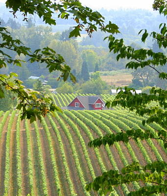 Poster featuring the photograph Wine Country by Debra Kaye McKrill