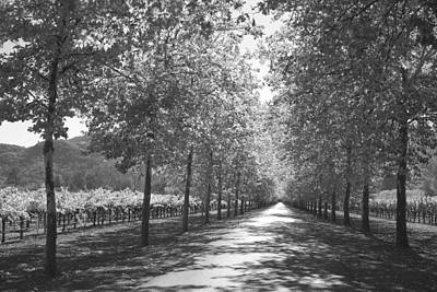 Wine Country Napa Black And White Poster
