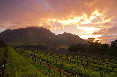 Wineland Sunrise Poster by Aaron Bedell