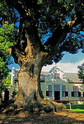 Winelands Manor Oak Poster