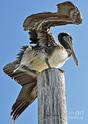 Wings Of A Pelican Poster by Susan Wiedmann