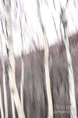 Winter Birches Tryptich 1 Poster