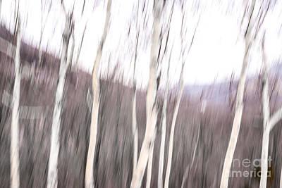 Winter Birches Tryptich 2 Poster