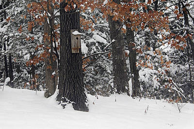 Poster featuring the photograph Winter Bird House by Wayne Meyer