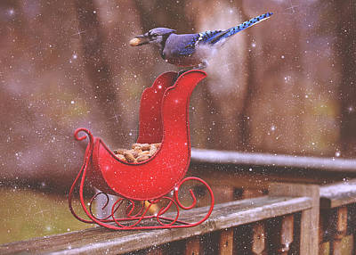 Winter Blue Jay #1 Poster