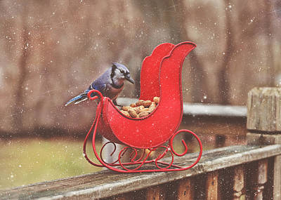Winter Blue Jay #3 Poster
