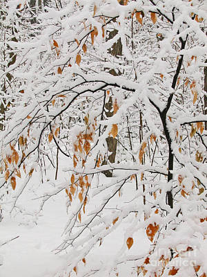 Winter Branches Poster by Ann Horn