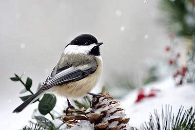 Winter Chickadee Poster by Christina Rollo