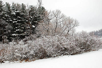 Winter Delight Poster by Aimee L Maher Photography and Art Visit ALMGallerydotcom
