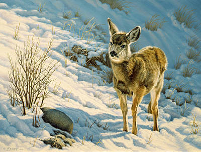 Winter Fawn - Mule Deer Poster