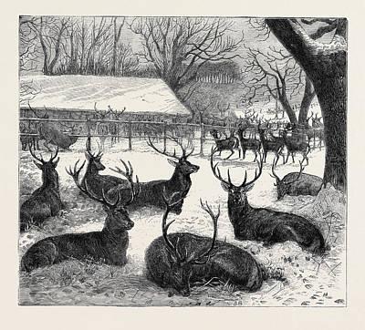 Winter Feeding In Windsor Park, 1870 Poster