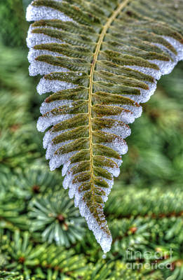 Winter Fern Poster