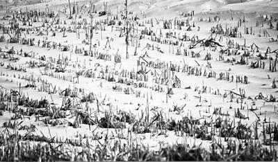 Winter Field Poster by Christi Kraft