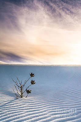 Winter Flowers Of White Sands Yucca Poster by Ellie Teramoto