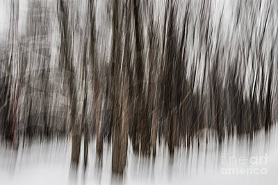 Winter Forest Abstract Poster