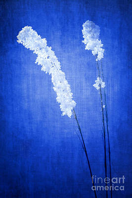Winter Frost Poster by Cindy Singleton