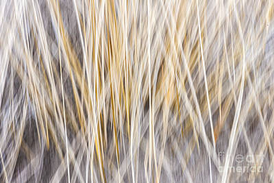 Winter Grass Abstract Poster