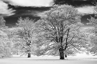 Winter Horse Chestnut Trees Monochrome Poster