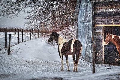 Winter Horse Hideout Poster