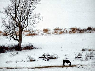 Winter Horse Pasture 2 Poster by Janine Riley