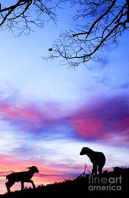 Winter Lambs Sunrise Poster