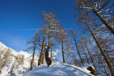 Winter Landscape With Larch Tree Forest Poster by Martin Zwick