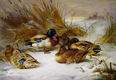 Winter Landscape With Mallard Poster