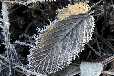 Winter Leaf Hoarfrost Poster by Daniel J Kasztelan