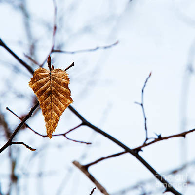 Poster featuring the photograph Winter Leaf by Kennerth and Birgitta Kullman