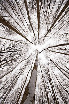 Winter Memories Poster by Mircea Costina Photography