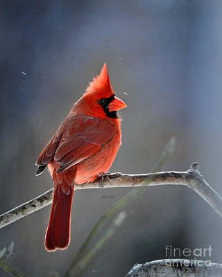 Winter Morning Cardinal Poster