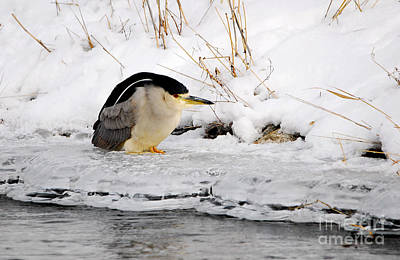 Winter Night Heron Poster by Marty Fancy