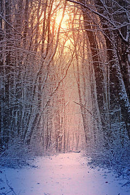 Winter Pathway Poster by Rob Blair