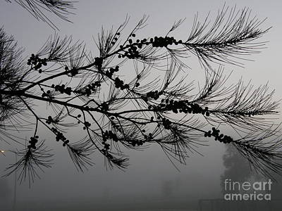Winter Pine Branch Poster by Bev Conover