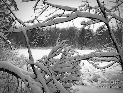 Winter Pond Poster by Kathi Mirto