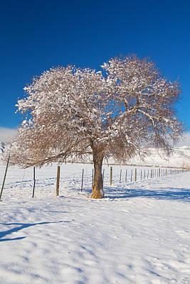 Winter Season On The Plains Portrait Poster