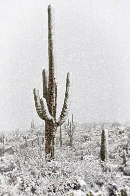 Winter Sonoran Style  Poster by Saija  Lehtonen