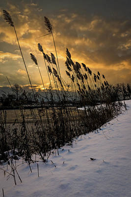 Winter Sunrise Through The Reeds Poster