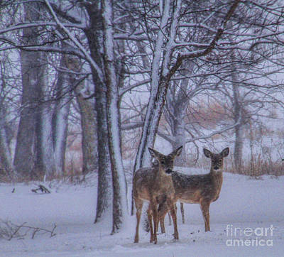 Winter Survival Poster by Elizabeth Winter