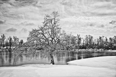 Winter Tree At The Park  B/w Poster