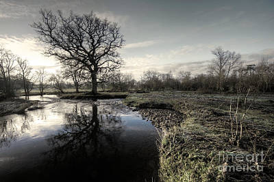 Winter Tree On The River Culm Poster