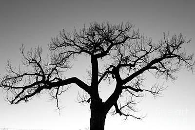 Winter Tree Silhouette Bw Poster