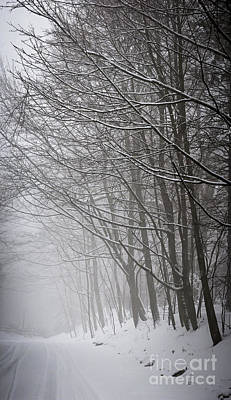Winter Trees Along Snowy Road Poster