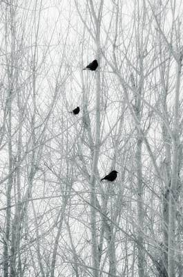 Abstract Crows In Winter Trees Poster