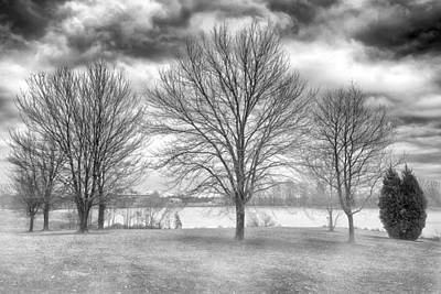 Winter Trees Poster by Howard Salmon