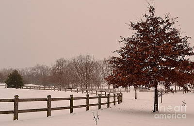 Winter Trees In Park Poster