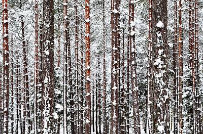 Poster featuring the photograph Winter Trunks by Kennerth and Birgitta Kullman