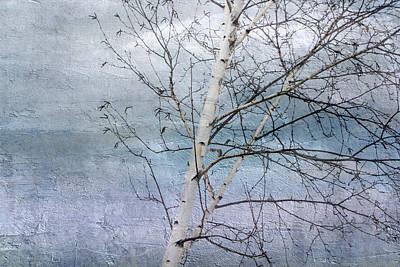 Winter White Birch  Poster